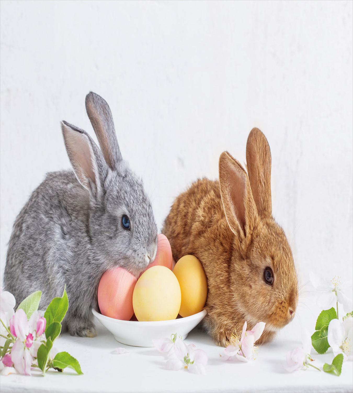 osterhase bettwäsche set zwei kaninchen mit eiern  ebay