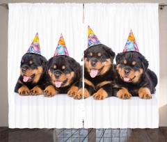 Birthday Dogs Hats Curtain