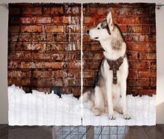 Domestic Pet Curtain