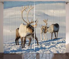 Reindeers Norway Caribou Curtain