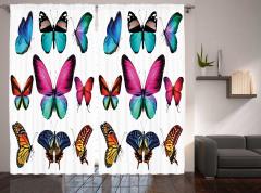 Vibrant Butterflies Set Curtain