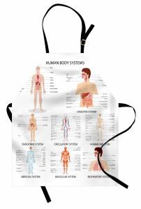 İnsanın Yapısı Desenli Mutfak Önlüğü Vücut Sistemleri