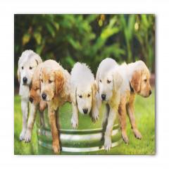 Islak Köpekler Bandana Fular