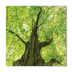 Ulu Ağaç ve Yaprakları Bandana Fular