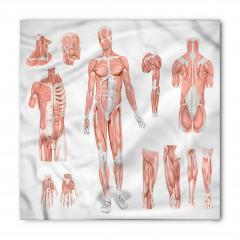 Vücudun Bölümleri Bandana Fular