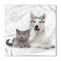 Kedi Köpek Dostluğu Bandana Fular