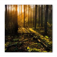 Ormanda Kesilen Ağaçlar Bandana Fular