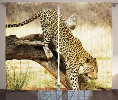 Leoparın Uyanışı Temalı Fon Perde Afrika Safari