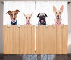 Hayvan Severlere Fon Perde Köpekler Yemek Vakti