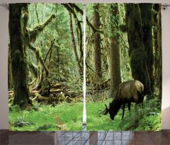 Yaban Hayatı Temalı Fon Perde Doğa Hayvan Ağaç