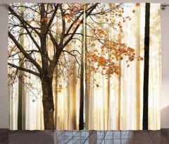 Sararmış Yapraklı Ağaç Fon Perde Çizgili Şık