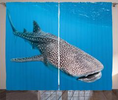 Balina Köpek Balığı Fon Perde Deniz Yaşamı