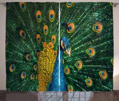 Tavus Kuşu Portreli Fon Perde Doğa Temalı Lacivert