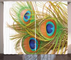 Tavus Kuşu Tüyü Desenli Fon Perde Yeşil Mavi Şık