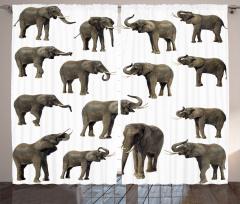 Göz Göze Filler Temalı Fon Perde Beyaz Arka Planlı
