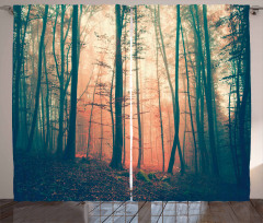 Ormanda Sonbahar Temalı Fon Perde Ağaç Sis