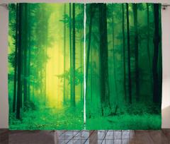 Sessiz Orman Temalı Fon Perde Doğa Ağaç Yeşil