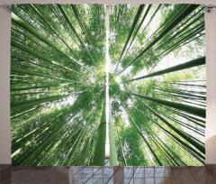 Bambu Ağaçları Desenli Fon Perde Şık Tasarım