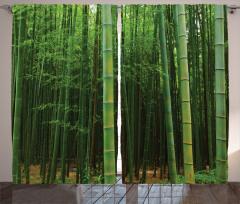 Yeşil Bambu Ormanı Fon Perde Modern