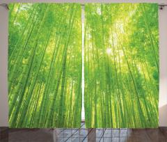 Bambu Ağacı Desenli Fon Perde Yeşil Sarı
