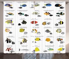 Egzotik Balık Temalı Fon Perde Rengarenk