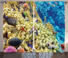 Sarı Mavi Mercan Fon Perde Deniz