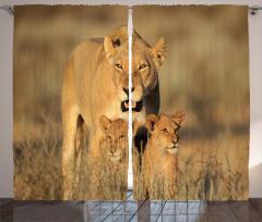 Aslan ve Yavruları Fon Perde Afrika