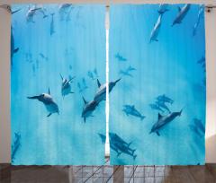 Köpek Balıkları Fon Perde Köpek Balıkları Mavi