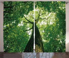 Yaşlı Ağaç Gölgesinde Fon Perde Yaşlı Ağaç Gölgesinde Huzur Temalı