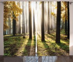 Güneşli Orman Fon Perde Sonbahar
