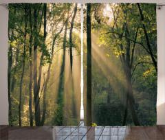 Sabahın İlk Işıkları Fon Perde Yeşil