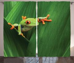 Yeşil Bitki ve Kurbağa Fon Perde Doğa