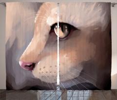 Kedi Portresi Fon Perde Kedi Portresi Gri