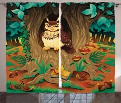 Ormanda Yaşlı Baykuş Fon Perde Ormanda Yaşlı Baykuş Yeşil