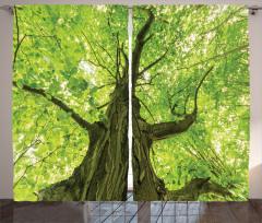 Ulu Ağaç ve Yaprakları Fon Perde Ağaç Yeşil Yapraklar