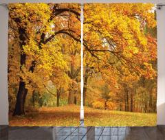 Turuncu Yapraklı Ağaç Fon Perde Doğa Orman Ağaç Turuncu