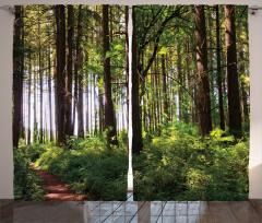 Yemyeşil Orman Fon Perde Ağaç Yeşil Orman