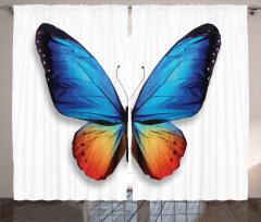 Kelebek Desenli Fon Perde Mavi Turuncu Şık