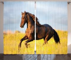 At ve Gün Batımı Fon Perde Çayırda Koşan At