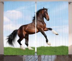 Şaha Kalkmış At Fon Perde Şaha Kalkmış At