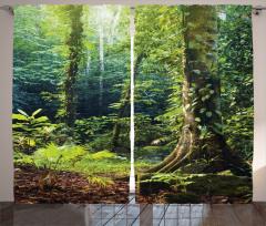 Orman Manzaralı Fon Perde Doğa Temalı Yeşil