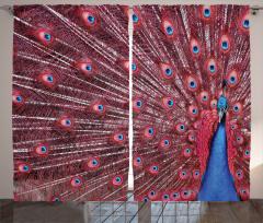 Tavus Kuşu Desenli Fon Perde Kırmızı Lacivert Doğa