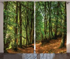 Yeşil Yol Temalı Fon Perde Ağaç Kahverengi Yeşil