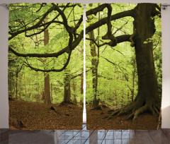 Orman Manzaralı Fon Perde Ağaç Yeşil Kahverengi