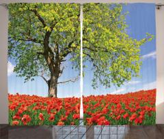 Gelincik Bahçesi Fon Perde Doğada Bahar