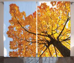 Sonbahar Temalı Fon Perde Ağaç Sarı Yaprak Doğa