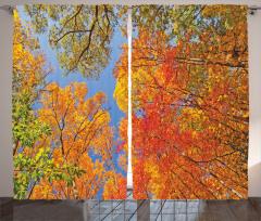 Sonbahar Temalı Fon Perde Turuncu Yapraklı Ağaçlar