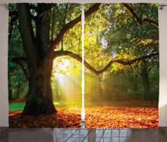 Sonbahar Temalı Fon Perde Orman Yeşil Ağaç Yaprak