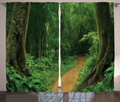Tropik Orman Manzaralı Fon Perde Yeşil Doğa Ağaç