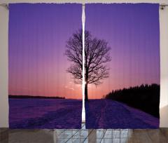 Gün Batımında Orman Fon Perde Gün Batımı Ağaç Orman Mor